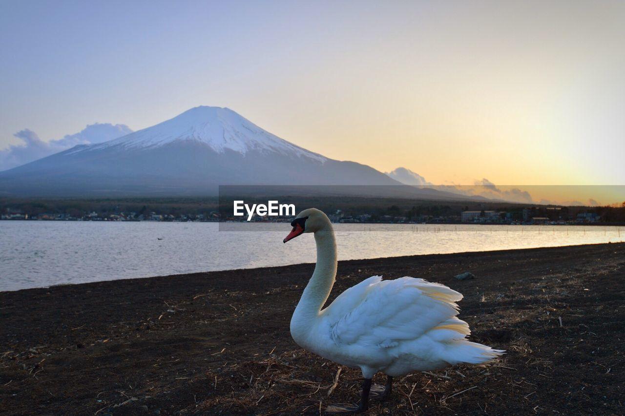 Swan On Lake Against Sky