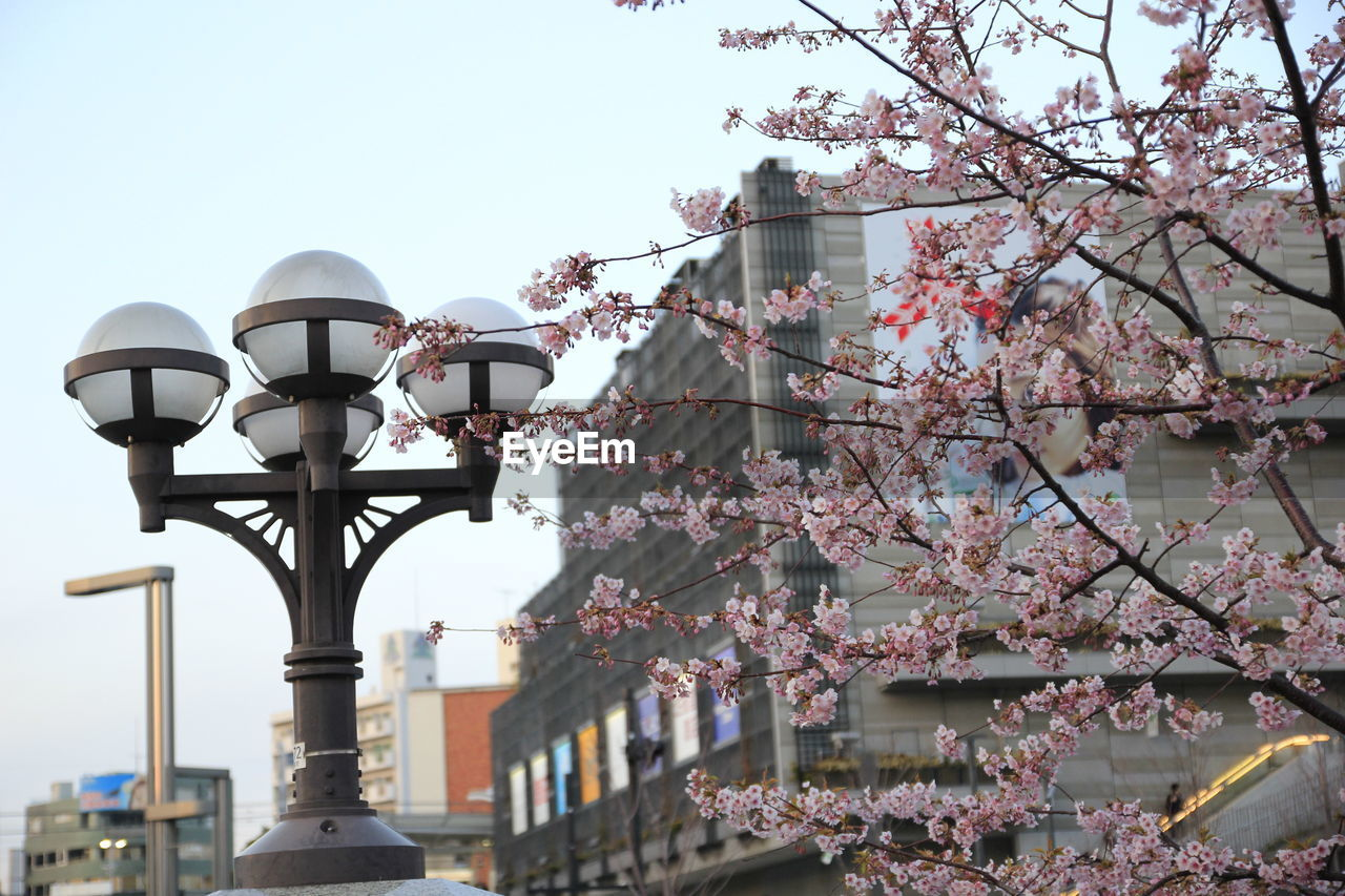 plant, lighting equipment, tree, nature, built structure, flower, building exterior, day, blossom, sky, architecture, low angle view, flowering plant, springtime, growth, fragility, cherry blossom, street light, branch, outdoors, no people, cherry tree