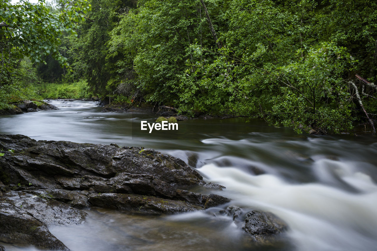 water, tree, plant, forest, scenics - nature, motion, beauty in nature, flowing water, river, nature, rock, no people, long exposure, land, growth, blurred motion, flowing, solid, rock - object, stream - flowing water, outdoors, rainforest, power in nature, running water
