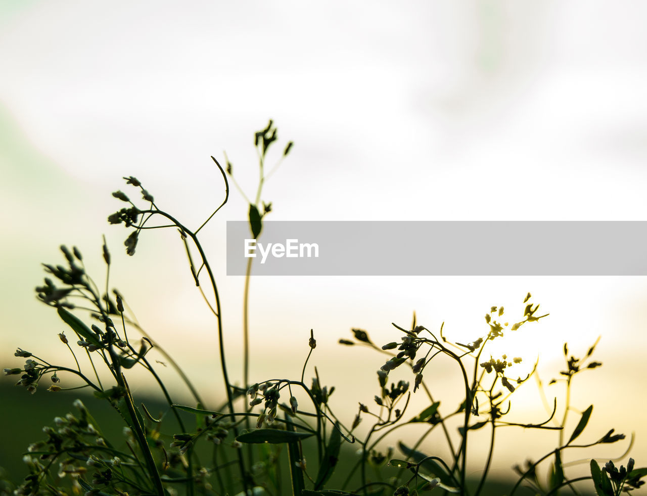 growth, nature, plant, beauty in nature, no people, field, tranquility, outdoors, flower, day, freshness, fragility, sky, close-up