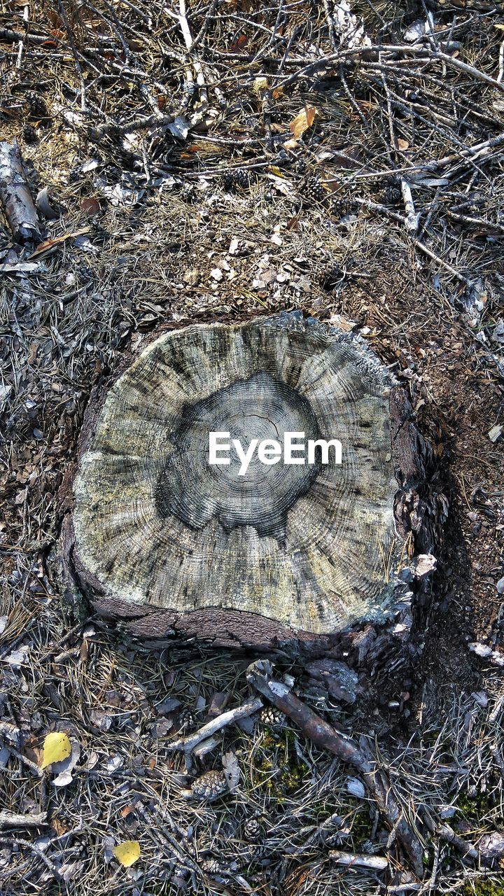 nature, high angle view, tree, day, no people, land, field, plant, wood - material, outdoors, close-up, animal, animal wildlife, textured, bark, animal themes, shell, directly above, animals in the wild, wood