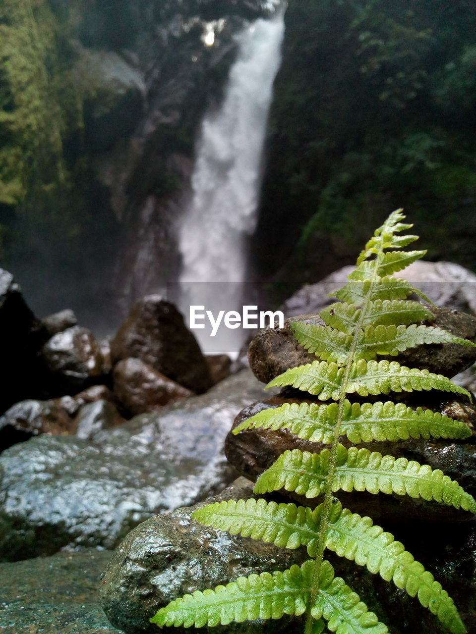 nature, green color, beauty in nature, no people, water, outdoors, day, waterfall, close-up, growth, freshness