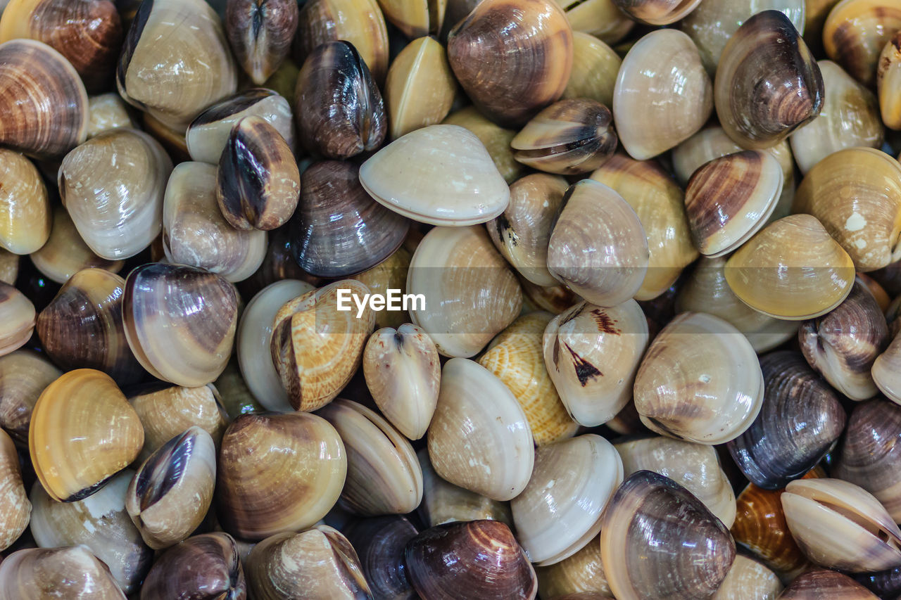 full frame, backgrounds, large group of objects, abundance, food and drink, freshness, no people, wellbeing, food, healthy eating, still life, close-up, shell, day, market, detail, indoors, high angle view, for sale, natural pattern