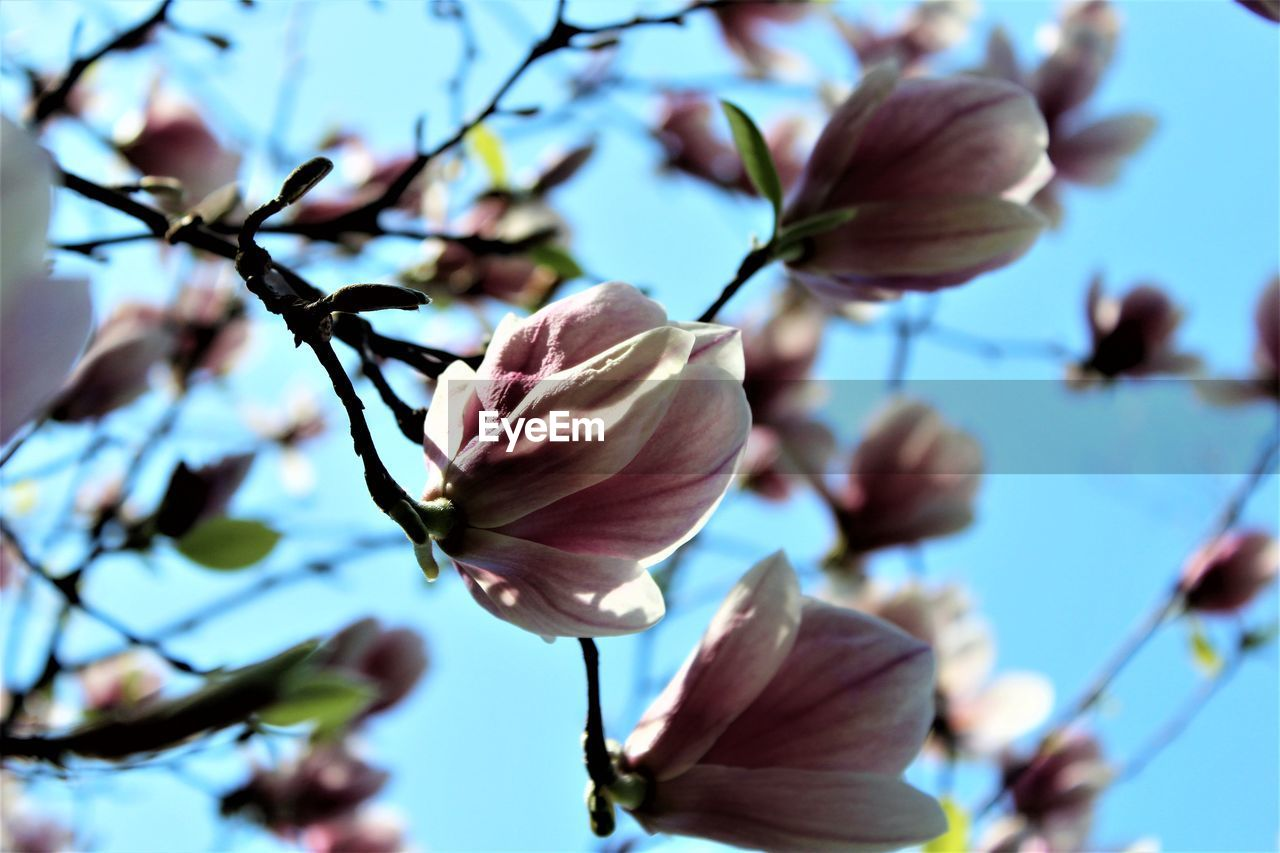 flower, fragility, beauty in nature, petal, nature, freshness, flower head, growth, branch, blossom, close-up, no people, springtime, day, focus on foreground, outdoors, tree, blooming, sky