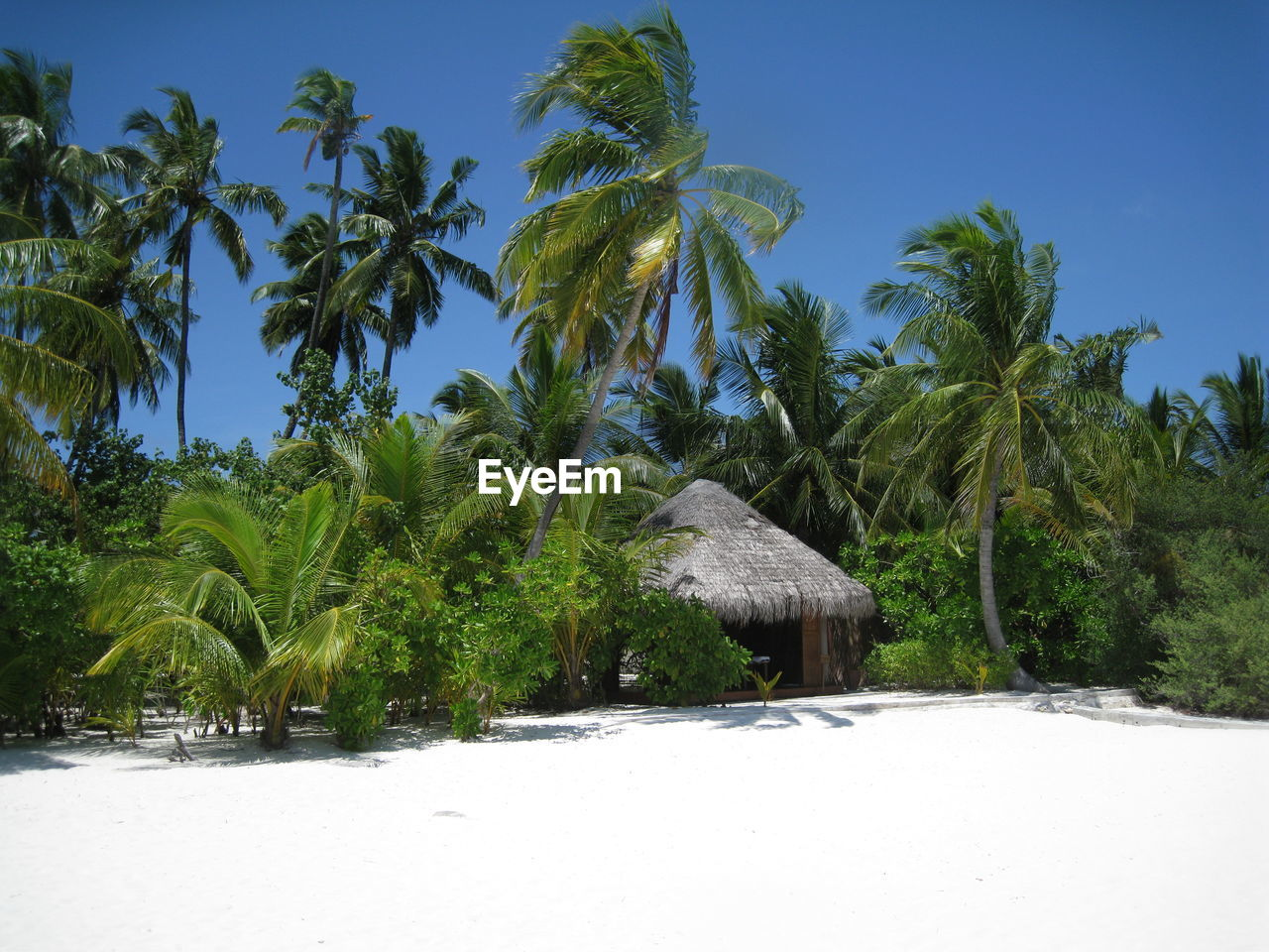 Hut And Coconut Palm Trees At Beach On Sunny Day
