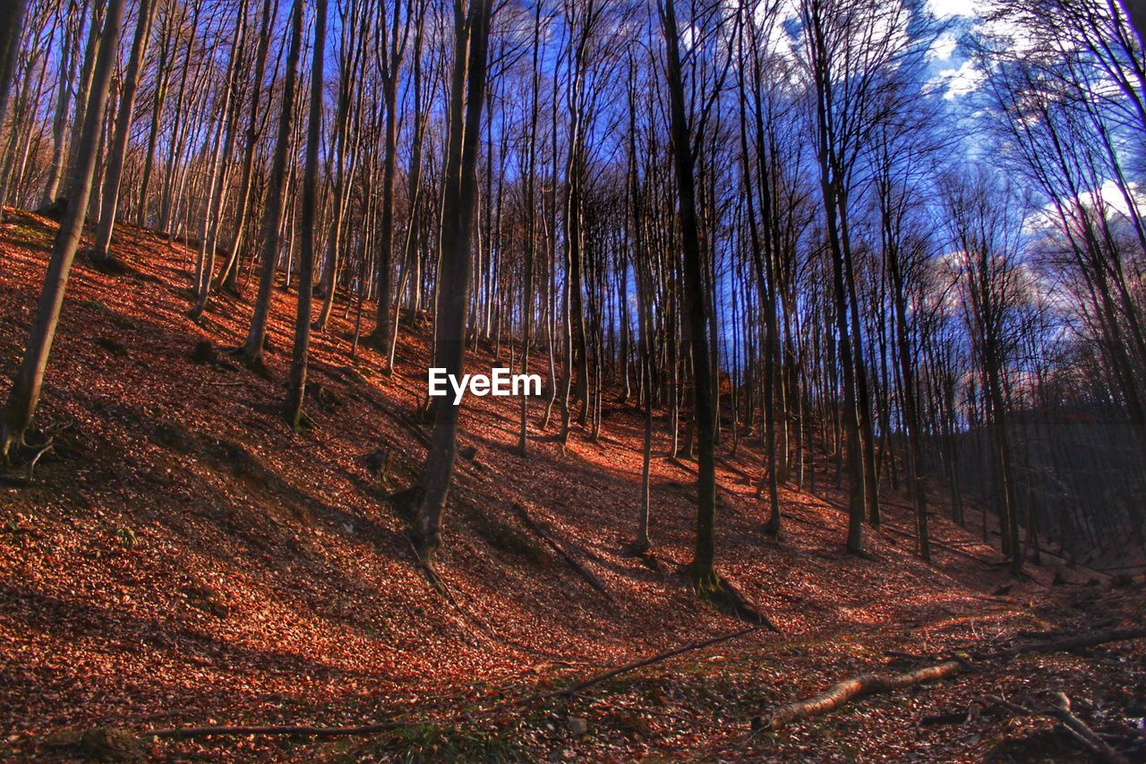 tree, land, forest, plant, tranquility, nature, beauty in nature, tranquil scene, tree trunk, trunk, no people, woodland, landscape, environment, non-urban scene, scenics - nature, growth, outdoors, day, sky