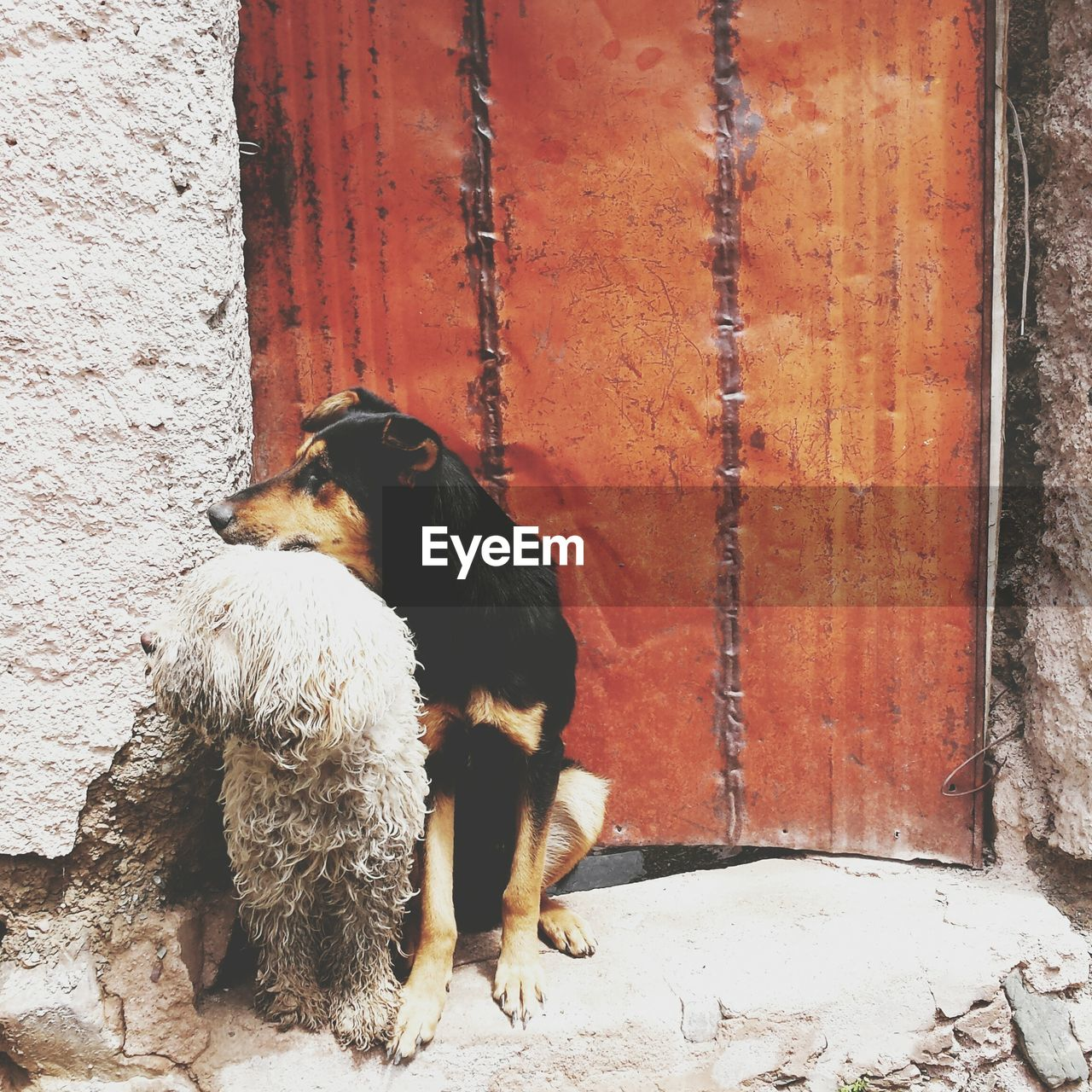 Two dogs sitting on doorway