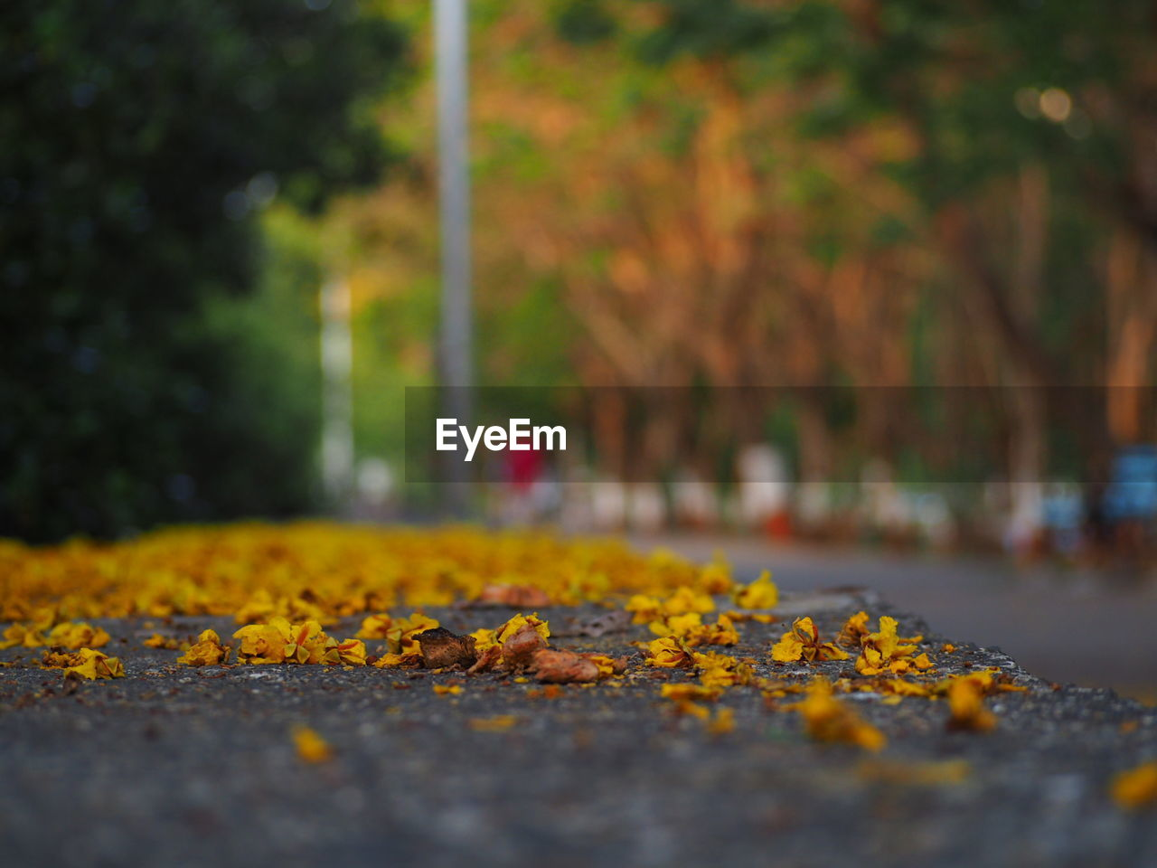 autumn, leaf, change, yellow, nature, selective focus, fallen, leaves, tree, dry, beauty in nature, no people, outdoors, day, close-up, maple leaf, tree trunk, maple, park - man made space, fragility, animal themes