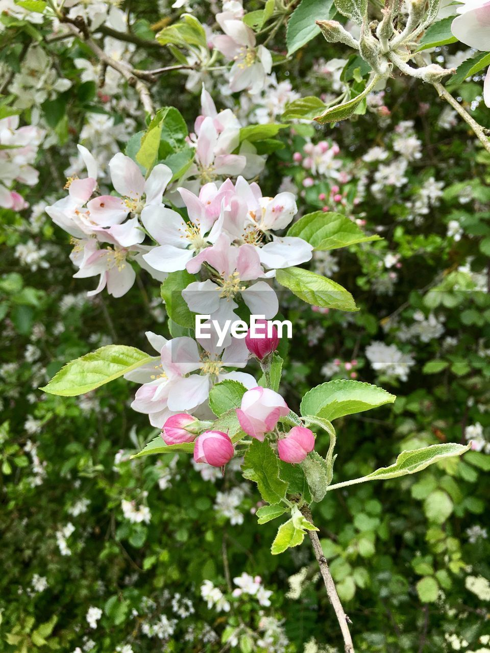flower, growth, fragility, pink color, nature, beauty in nature, petal, blossom, day, tree, freshness, no people, focus on foreground, plant, blooming, outdoors, branch, close-up, springtime, flower head