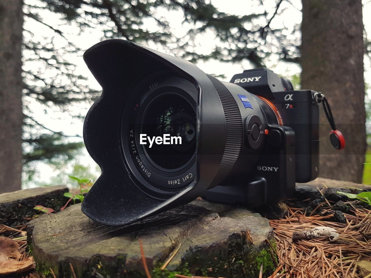 technology, photography themes, camera - photographic equipment, tree, close-up, plant, lens - optical instrument, camera, day, photographic equipment, no people, digital camera, nature, focus on foreground, black color, outdoors, modern, equipment, binoculars, single object, slr camera