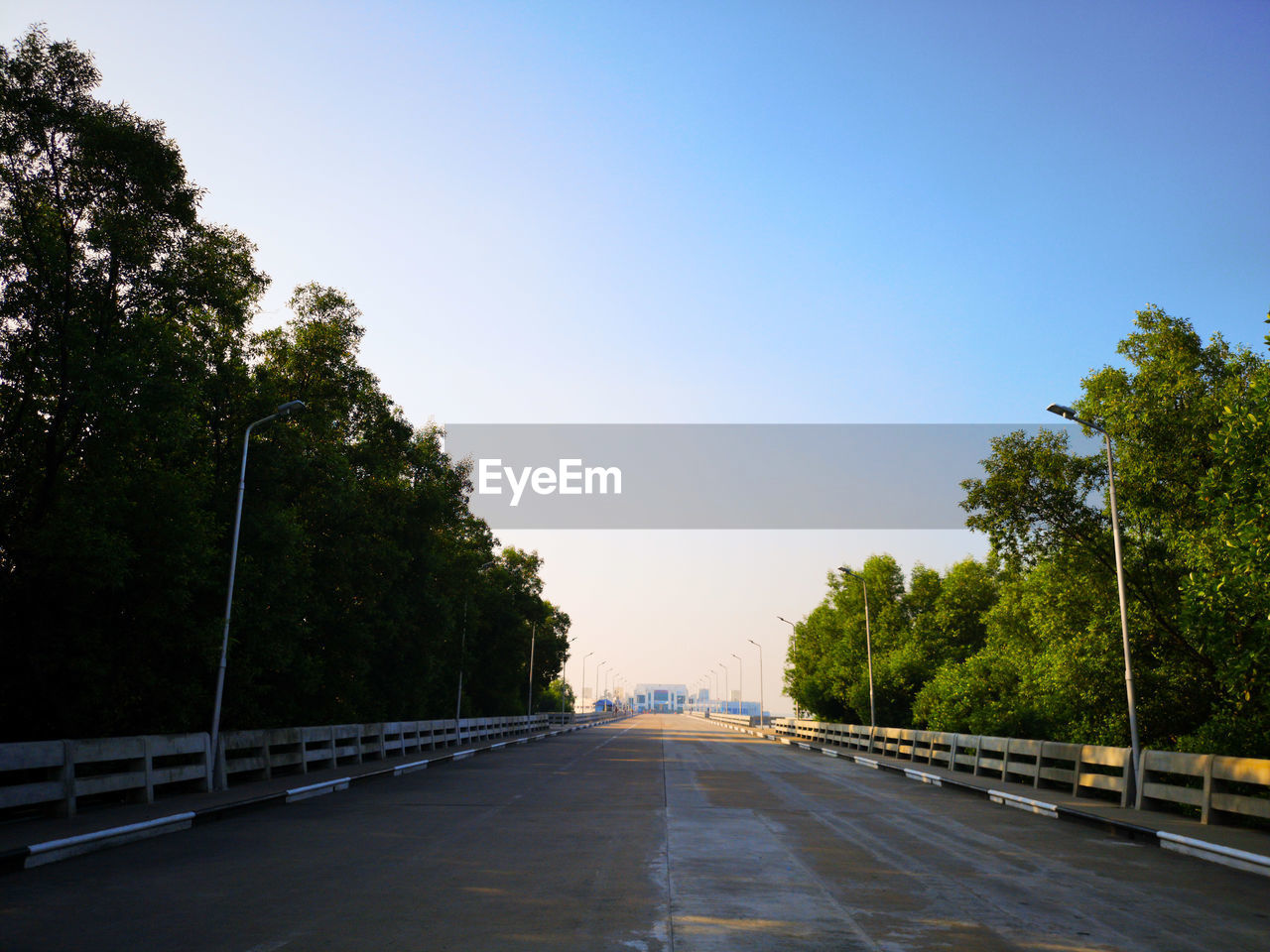 tree, plant, sky, direction, the way forward, transportation, nature, road, no people, clear sky, diminishing perspective, architecture, day, outdoors, built structure, street, empty, copy space, city, growth, treelined