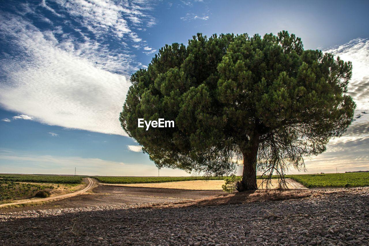 Tree growing on field against sky