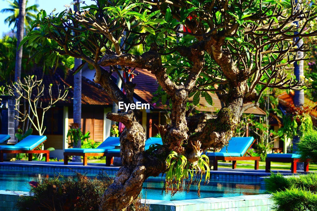 tree, plant, architecture, built structure, building exterior, nature, day, building, growth, no people, outdoors, house, tourist resort, branch, travel destinations, green color, water, city, tropical climate, multi colored, swimming pool