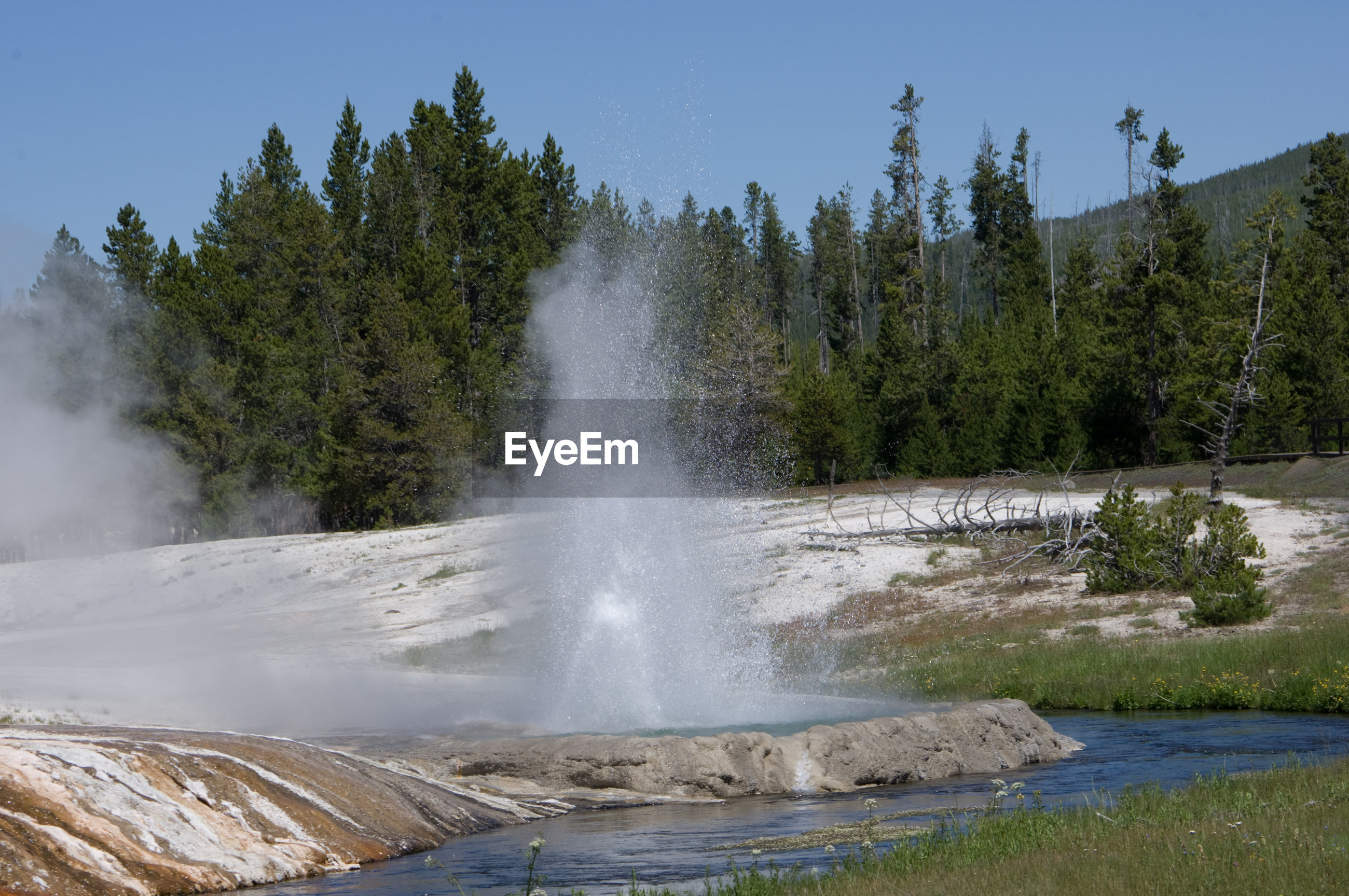 Scenic view of geyser by trees against sky