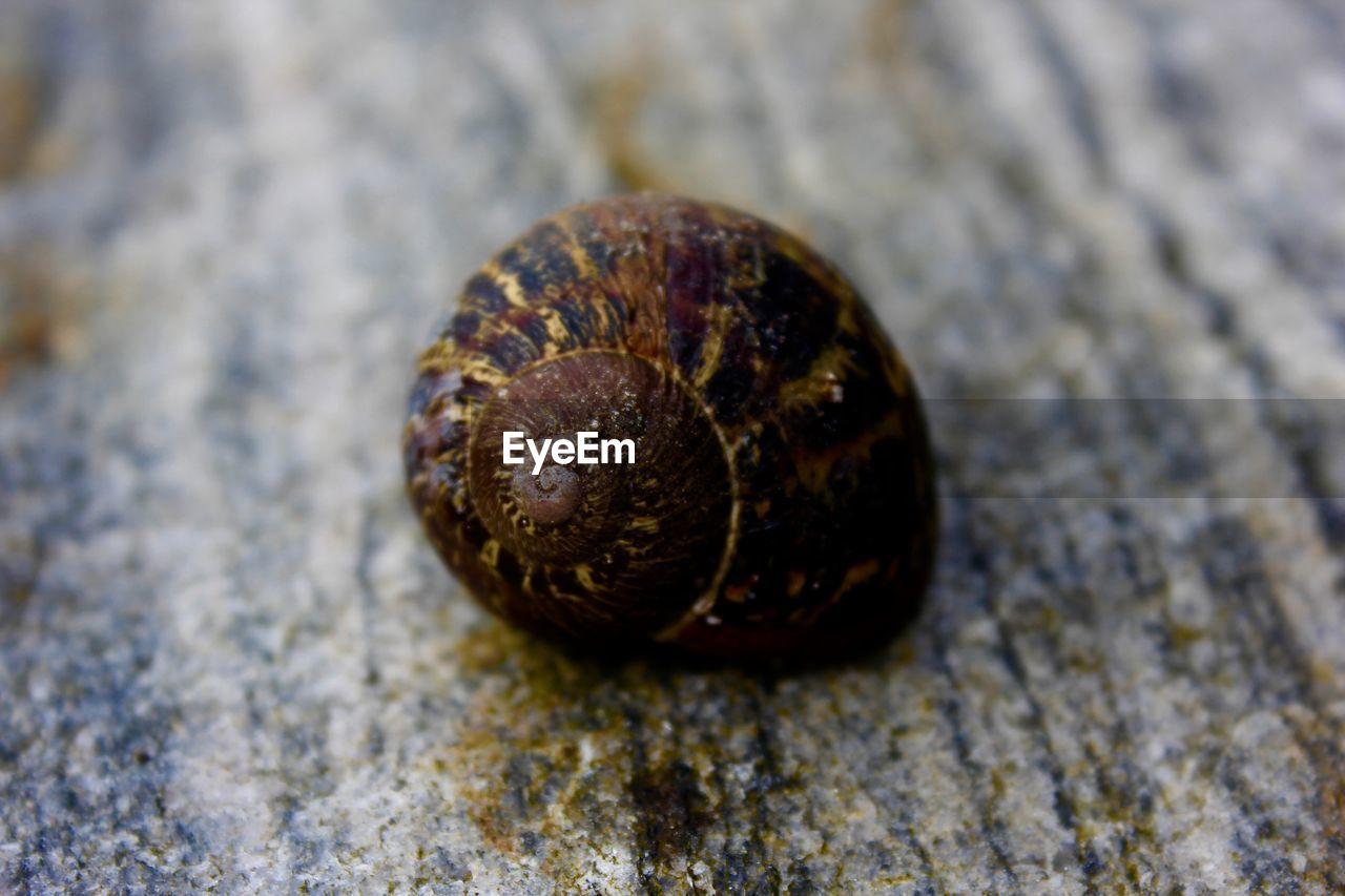 Detail shot of a snail