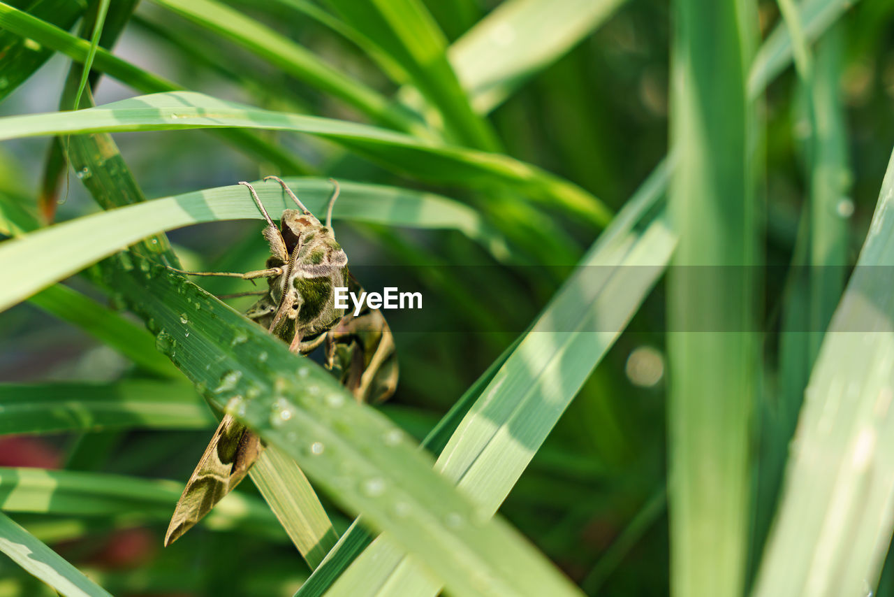 green color, invertebrate, animals in the wild, insect, animal wildlife, animal themes, animal, one animal, plant, grass, close-up, leaf, plant part, nature, focus on foreground, no people, growth, day, blade of grass, beauty in nature, outdoors, animal wing