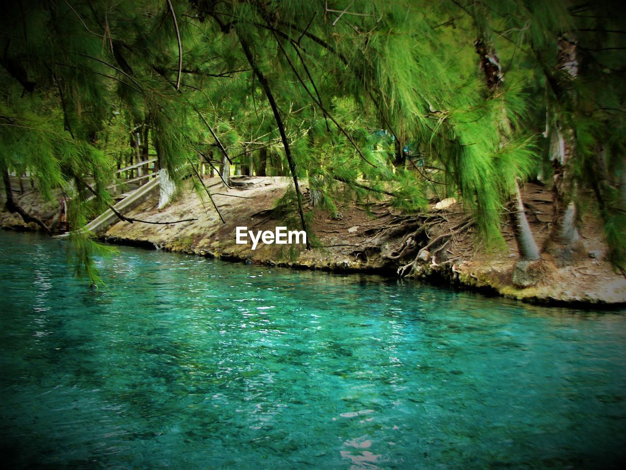nature, water, tranquil scene, beauty in nature, tranquility, scenics, no people, forest, tree, outdoors, landscape, day