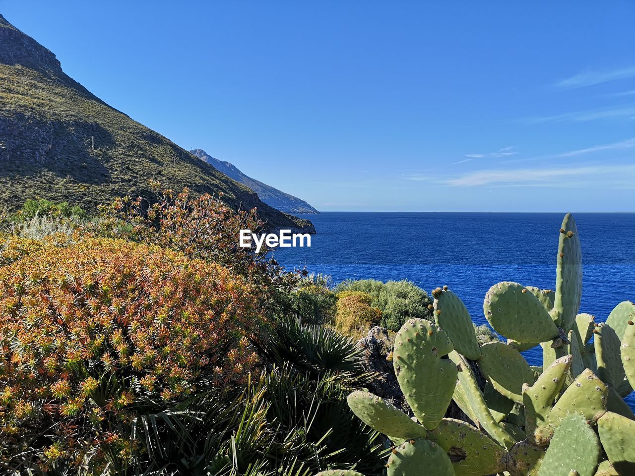 sea, water, sky, plant, beauty in nature, scenics - nature, tranquil scene, tranquility, nature, growth, blue, horizon over water, no people, cactus, mountain, succulent plant, day, land, horizon