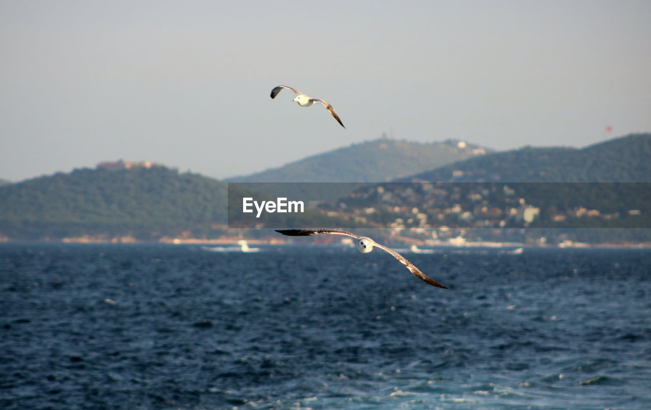 sea, flying, water, nature, mid-air, beauty in nature, animals in the wild, mountain, bird, waterfront, outdoors, scenics, focus on foreground, one animal, tranquility, animal themes, animal wildlife, day, sky, no people, spread wings, clear sky, paragliding