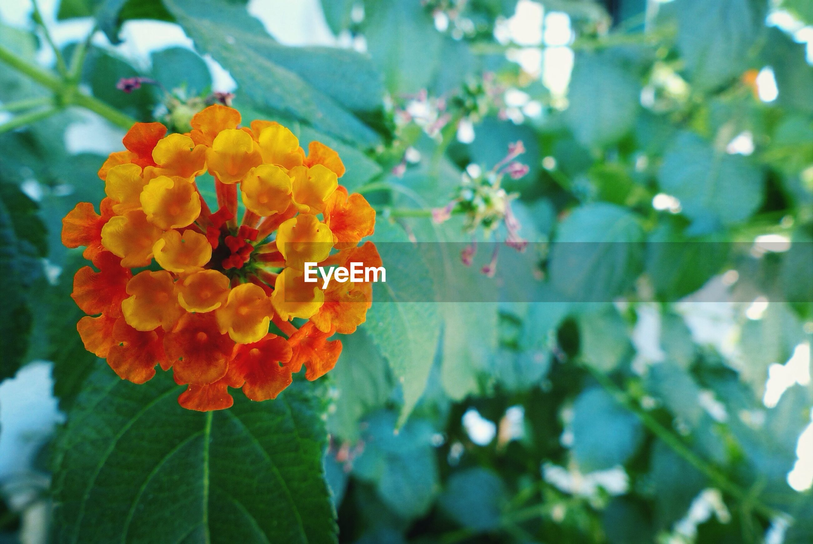 flower, freshness, petal, fragility, growth, flower head, focus on foreground, beauty in nature, leaf, blooming, close-up, nature, plant, in bloom, orange color, blossom, day, red, outdoors, park - man made space