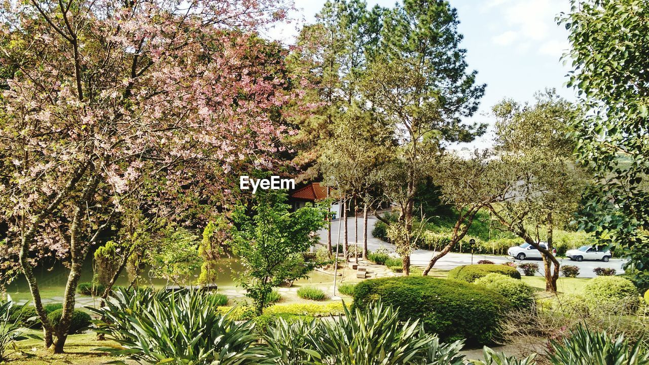 View Of Garden