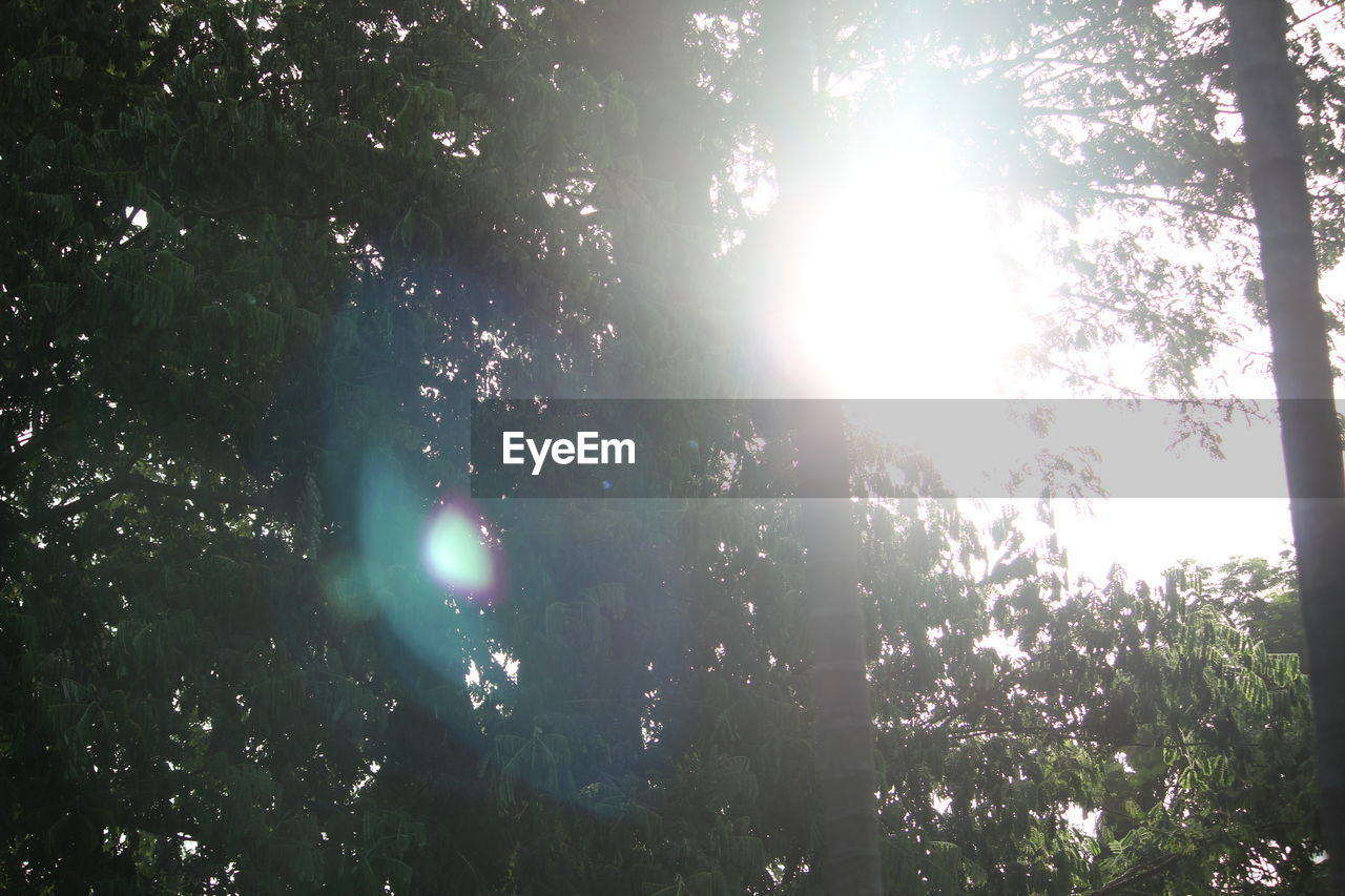 tree, plant, sunlight, lens flare, nature, sunbeam, sun, growth, beauty in nature, sky, low angle view, day, tranquility, no people, forest, outdoors, streaming, land, sunny, branch, solar flare, bright, brightly lit