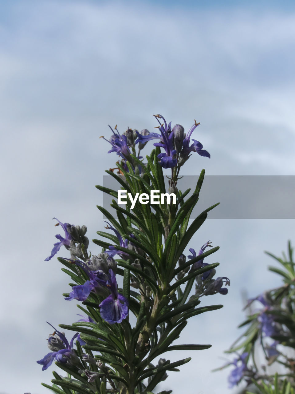 purple, flower, nature, beauty in nature, growth, fragility, plant, no people, freshness, petal, day, outdoors, sky, close-up, flower head
