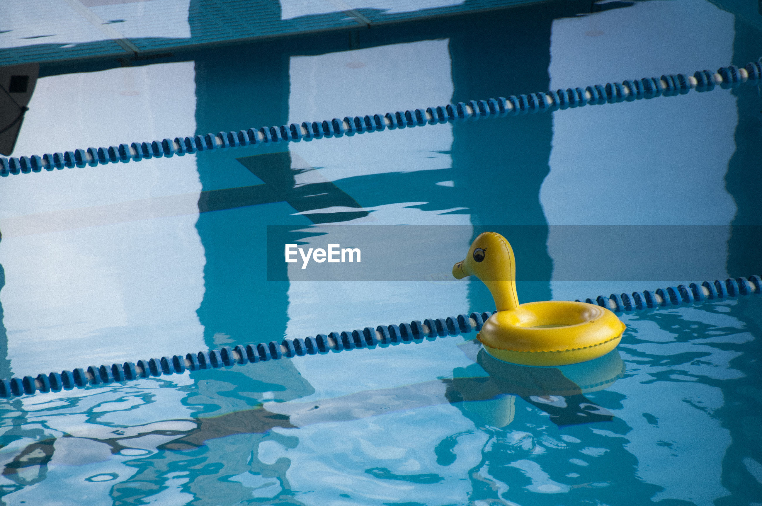 Rubber duck floating on swimming pool
