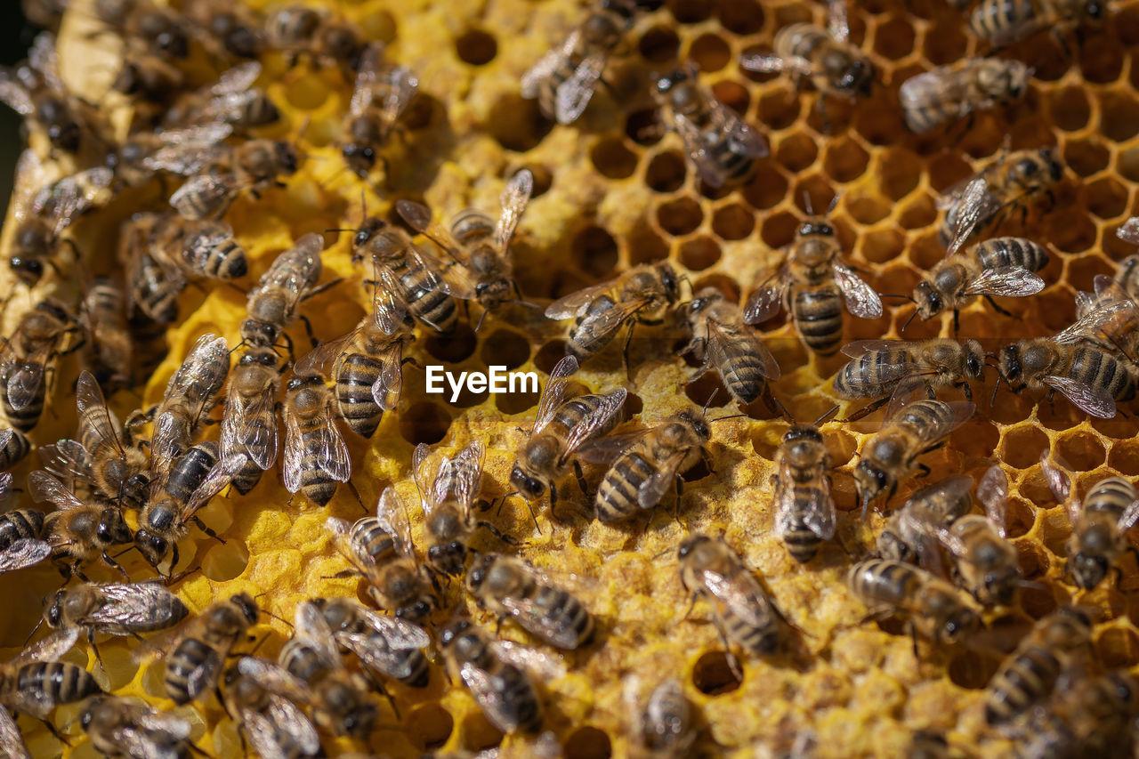 HIGH ANGLE VIEW OF BEE ON YELLOW
