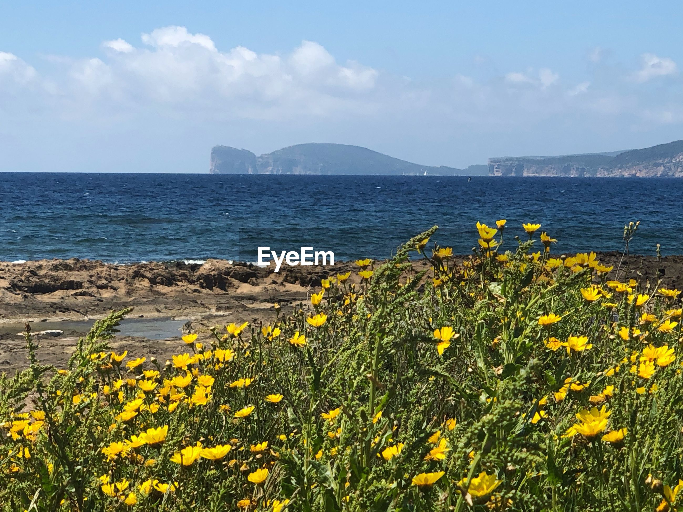 SCENIC VIEW OF SEA AND YELLOW FLOWERS AGAINST SKY