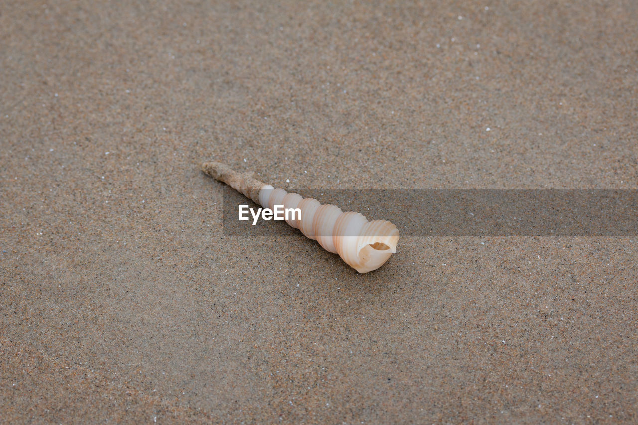 HIGH ANGLE VIEW OF SHELL ON BEACH
