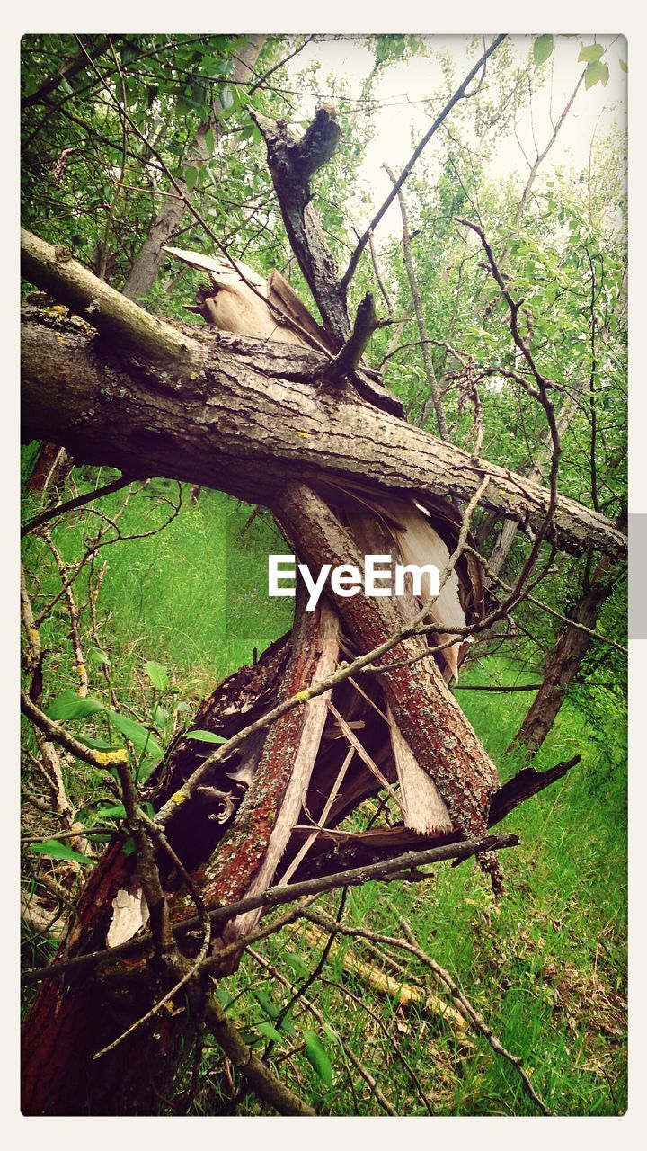 tree, branch, day, no people, nature, forest, outdoors, tree trunk, wood - material, dead tree, beauty in nature, close-up
