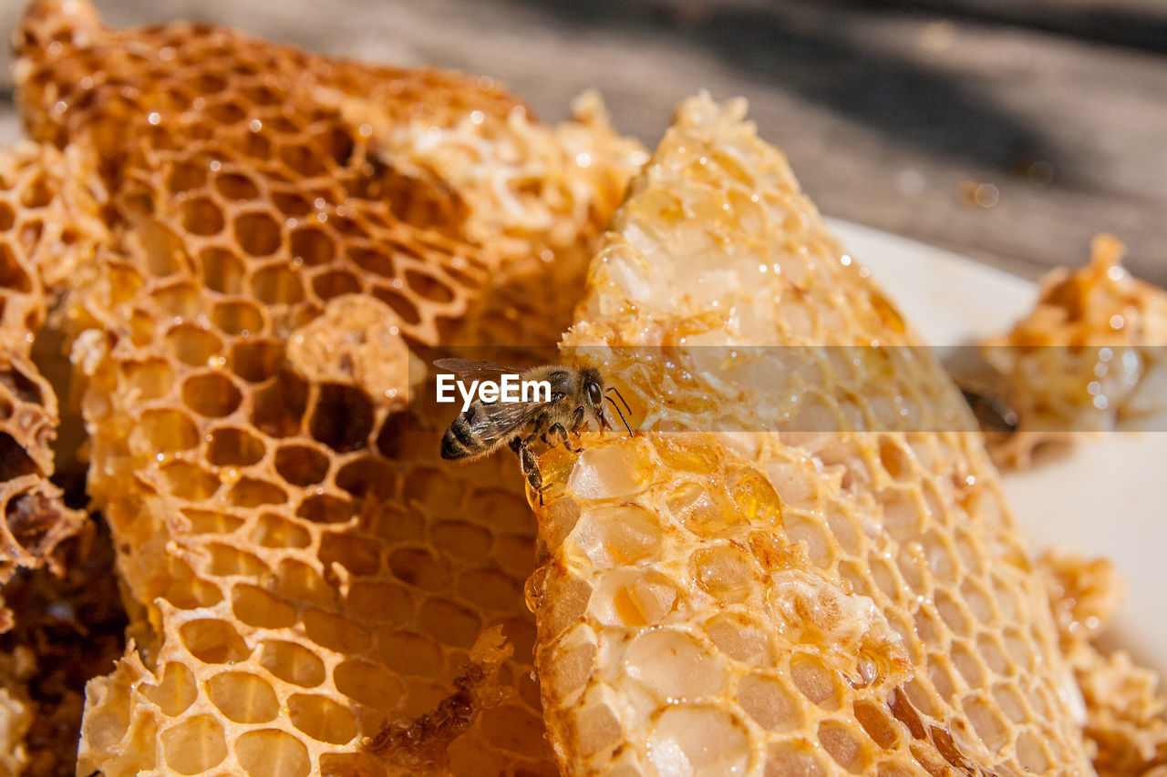 Close-Up Of Bee On Honey Comb