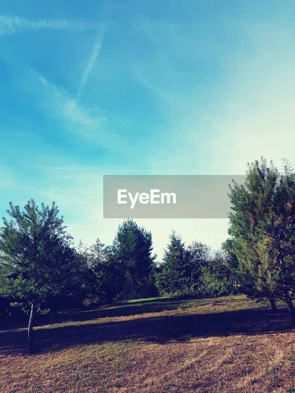 tree, plant, sky, tranquility, tranquil scene, cloud - sky, beauty in nature, nature, no people, day, growth, land, scenics - nature, landscape, field, environment, sunlight, grass, outdoors, non-urban scene