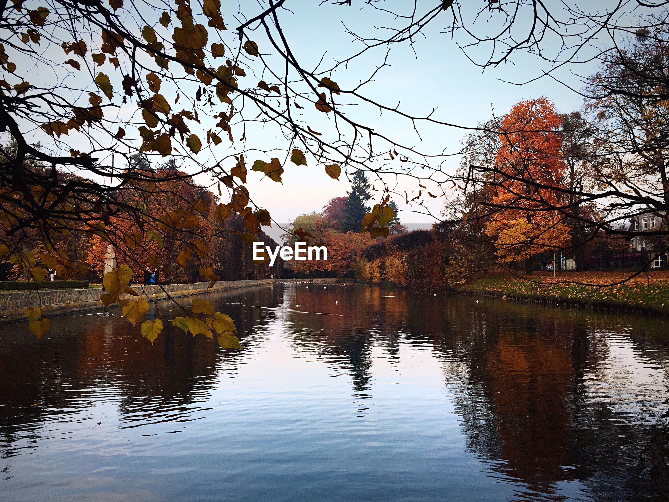 Scenic view of canal amidst trees at park