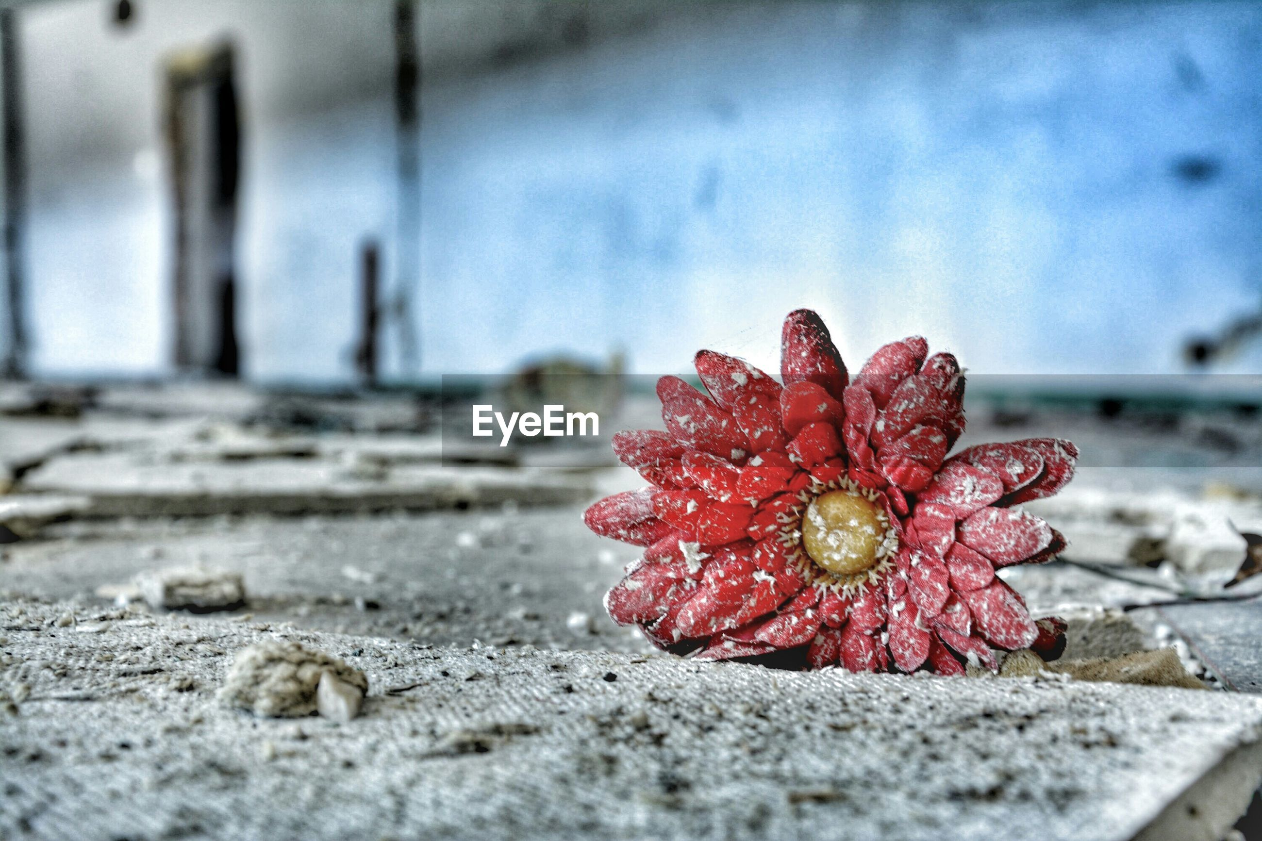 close-up, focus on foreground, selective focus, red, freshness, nature, surface level, flower, no people, day, beauty in nature, fragility, outdoors, growth, wet, tranquility, plant, sunlight, water, stone - object