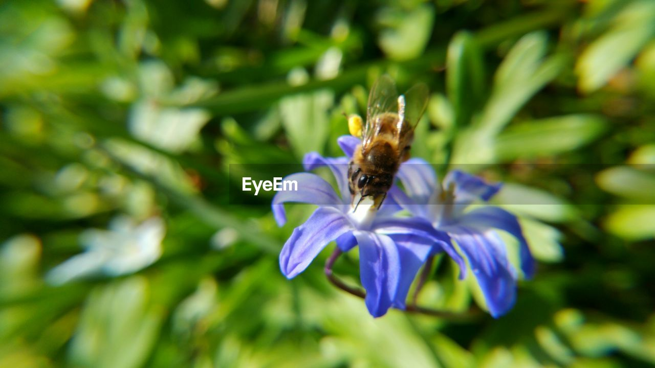 flower, nature, growth, beauty in nature, petal, one animal, purple, fragility, plant, insect, freshness, animal themes, green color, no people, animals in the wild, day, outdoors, bee, flower head, close-up, pollination, blooming