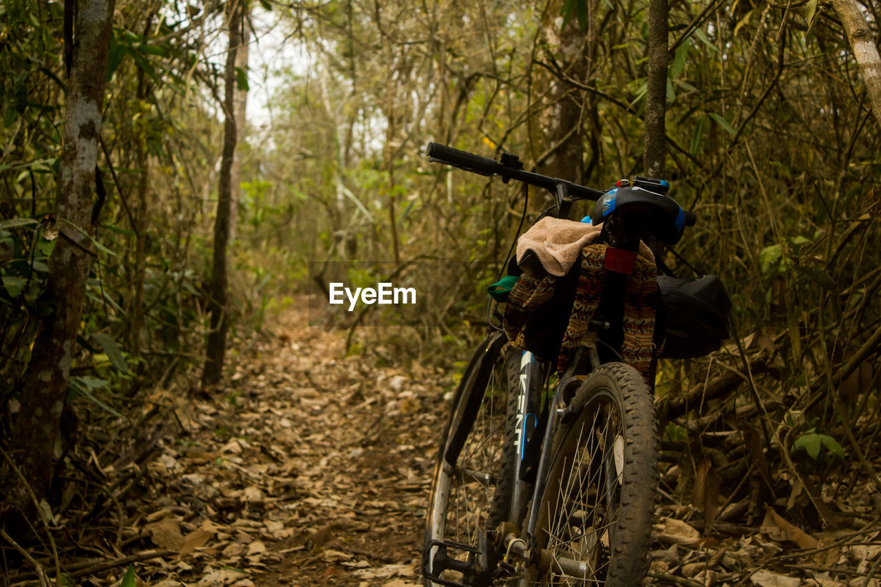 REAR VIEW OF MAN CYCLING ON TREE IN FOREST