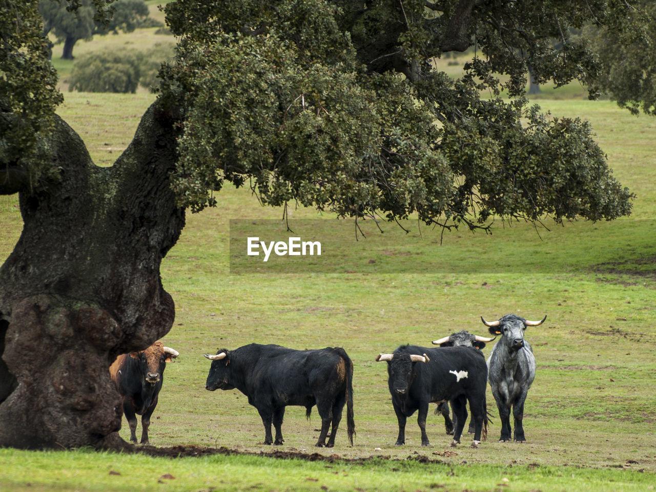 animal themes, mammal, animal, group of animals, plant, animal wildlife, tree, grass, field, domestic animals, livestock, vertebrate, land, nature, no people, landscape, day, animals in the wild, domestic, plain, herbivorous, outdoors, herd