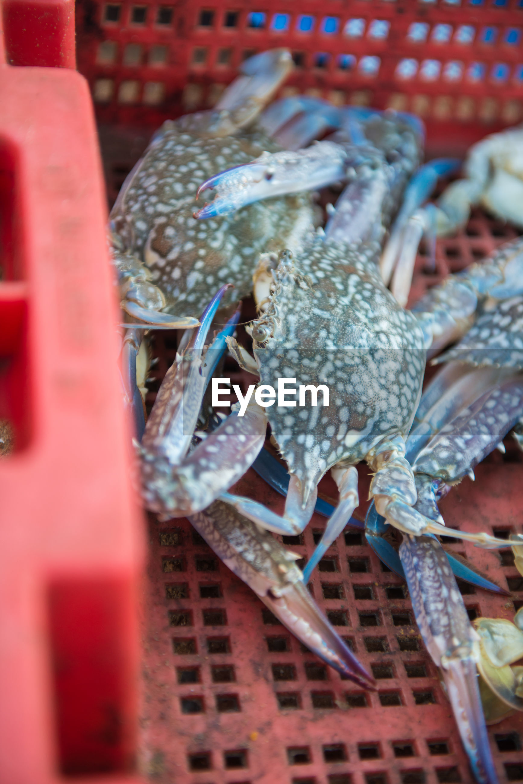 High angle view of crabs in basket