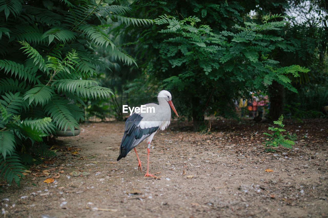 Bird standing on field