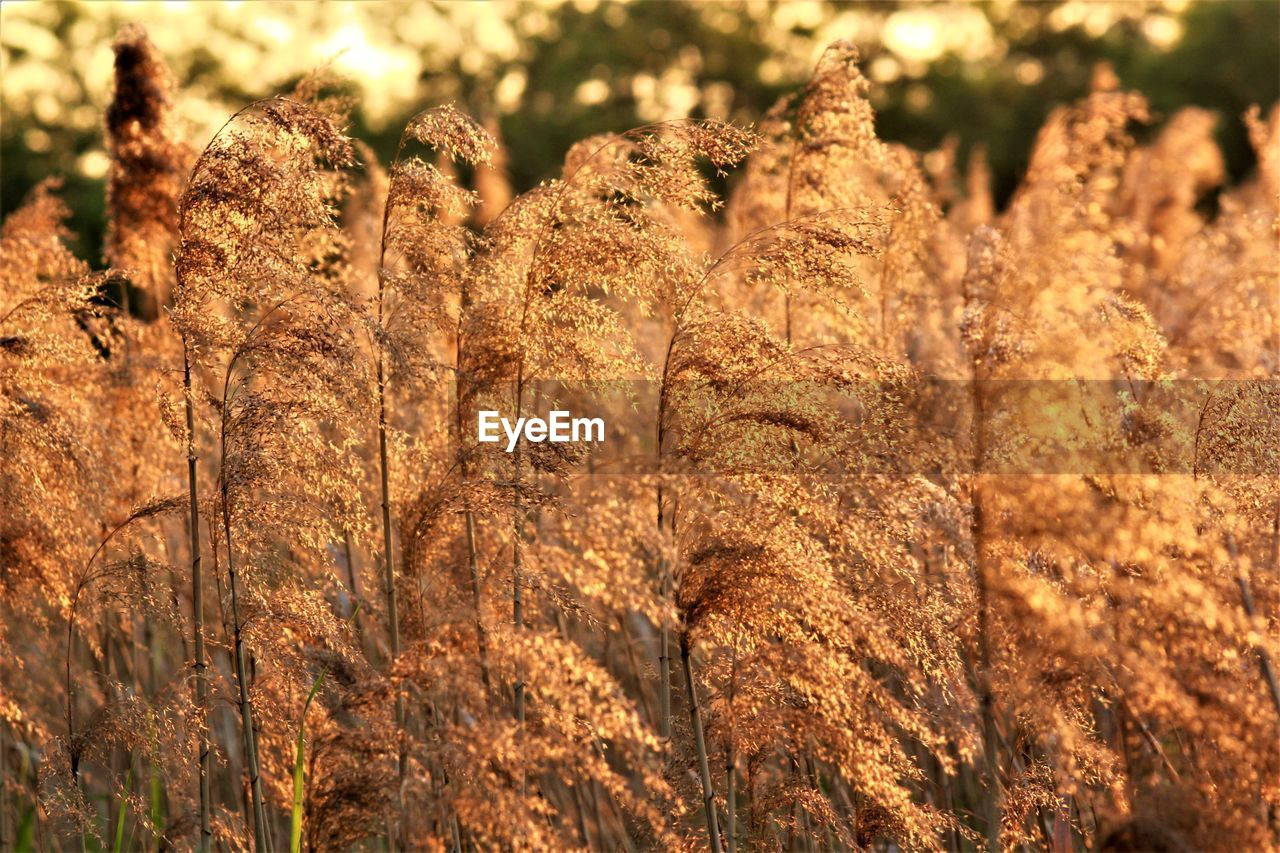 nature, outdoors, plant, day, no people, growth, field, tranquility, beauty in nature, close-up
