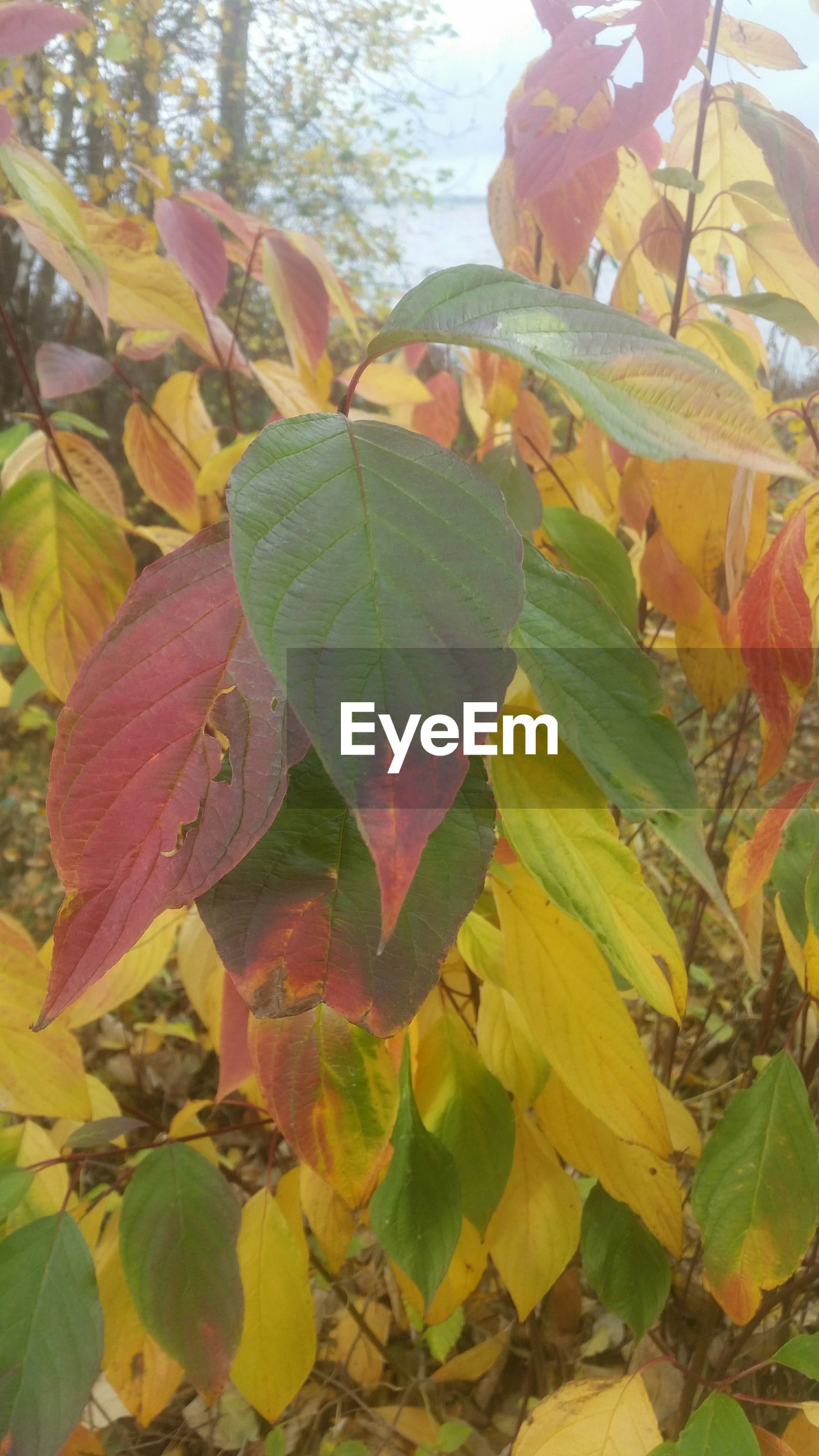 leaf, growth, nature, leaves, autumn, close-up, branch, green color, season, leaf vein, tree, beauty in nature, sunlight, change, focus on foreground, yellow, day, tranquility, outdoors, plant