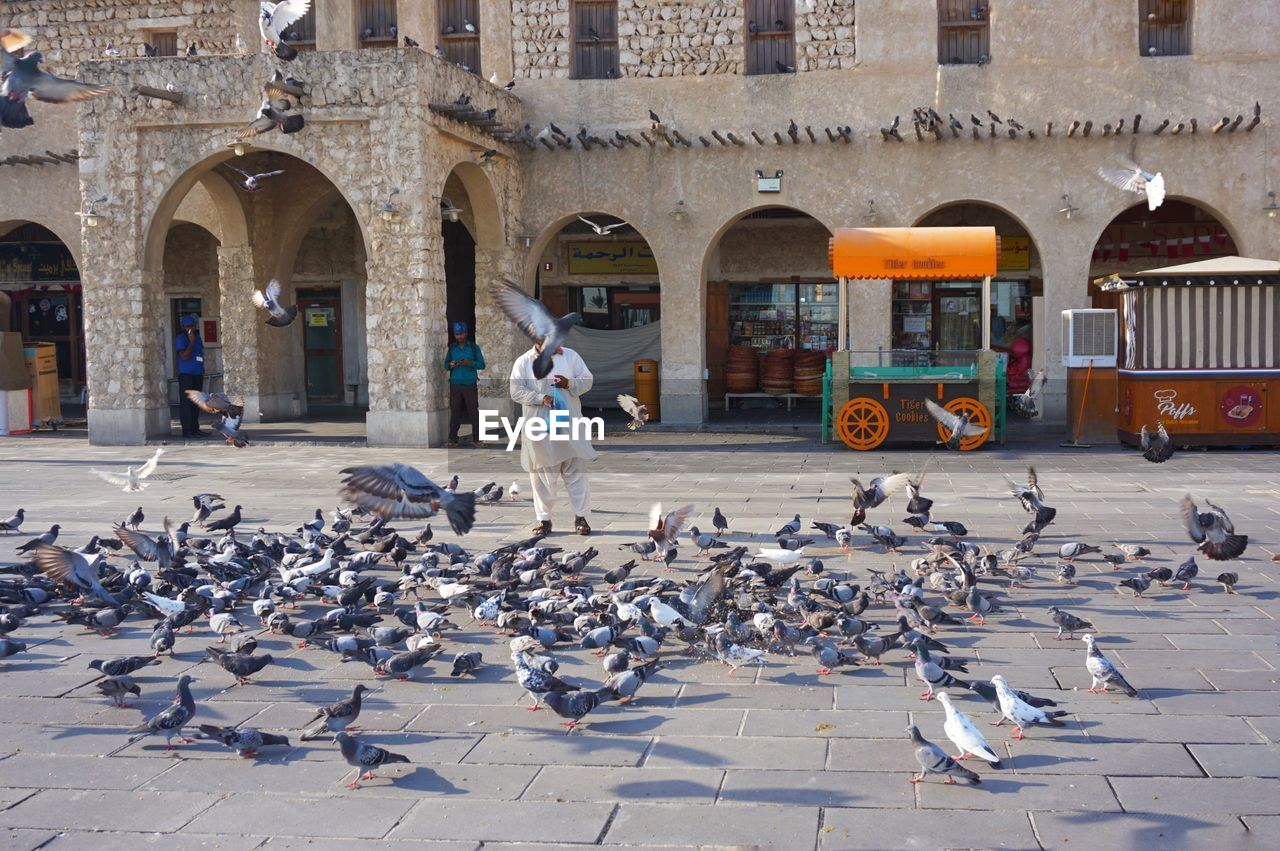 animals in the wild, animal wildlife, architecture, bird, animal themes, animal, built structure, group of animals, building exterior, large group of animals, pigeon, vertebrate, day, flock of birds, city, real people, arch, flying, incidental people, building, outdoors, seagull