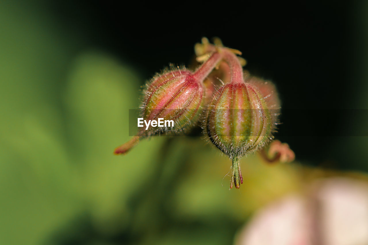 close-up, plant, growth, nature, focus on foreground, no people, day, green color, bud, beauty in nature, flower, new life, selective focus, beginnings, outdoors, flowering plant, vulnerability, fragility, freshness, animals in the wild, sepal