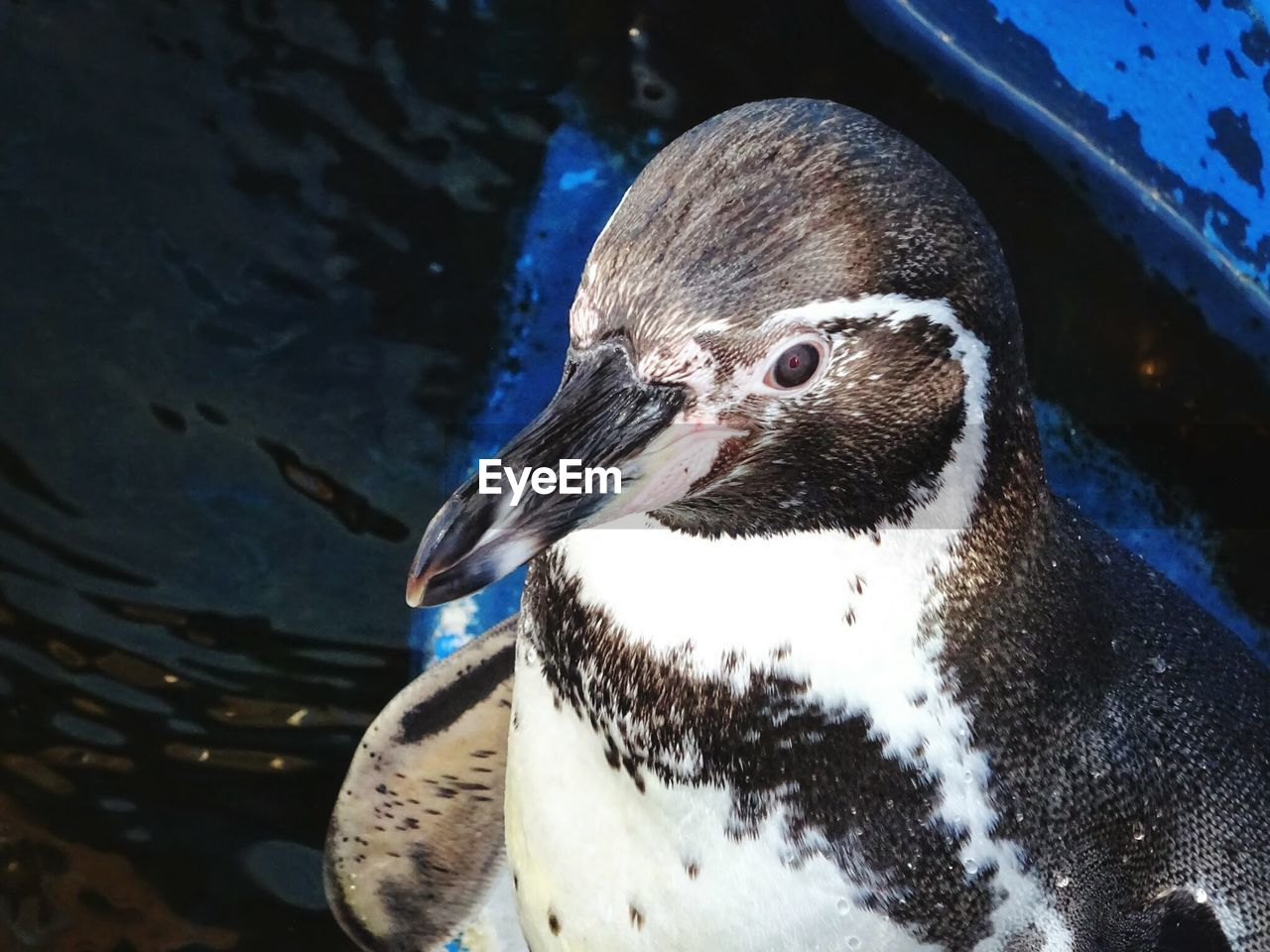 High angle view of penguin by lake
