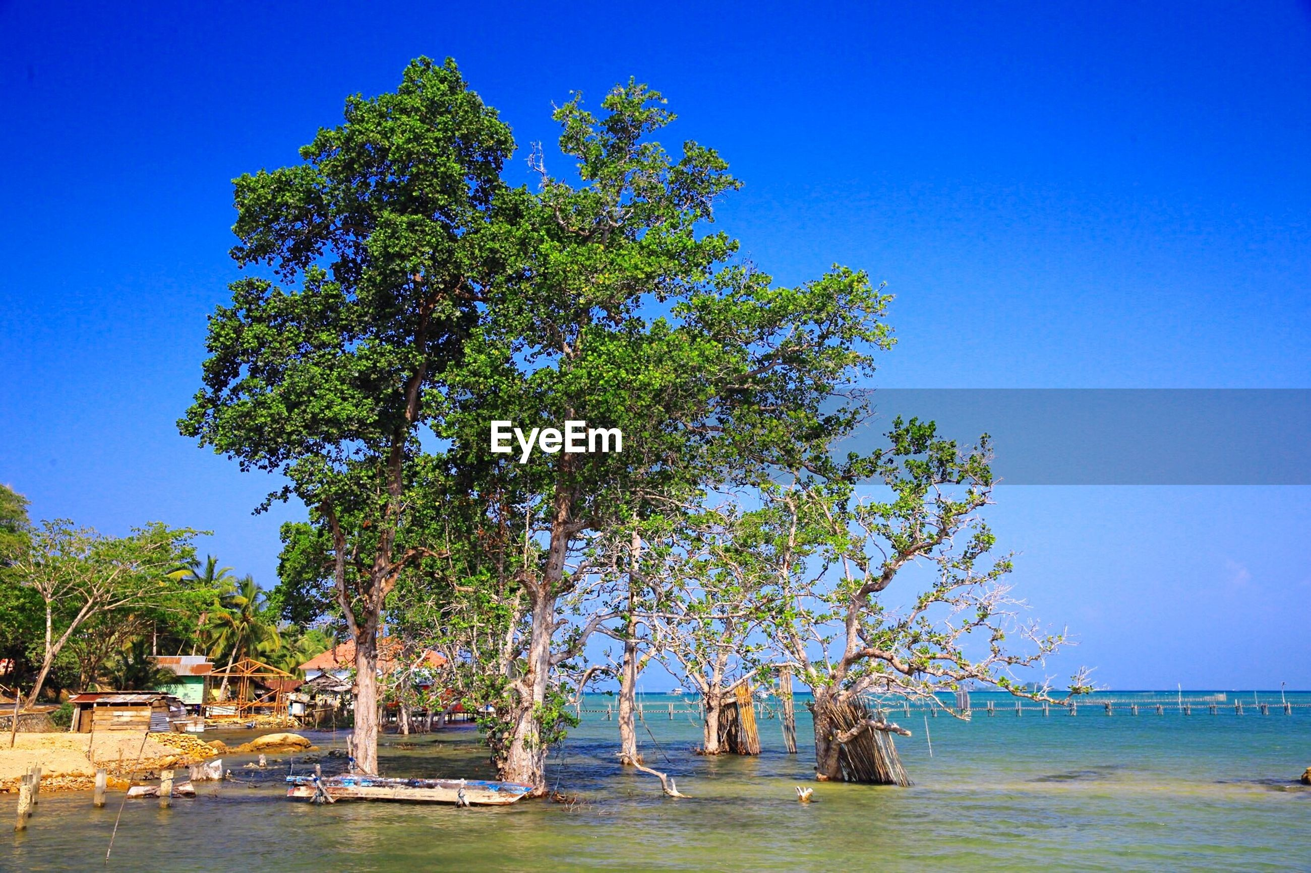 View of trees by calm sea against clear blue sky