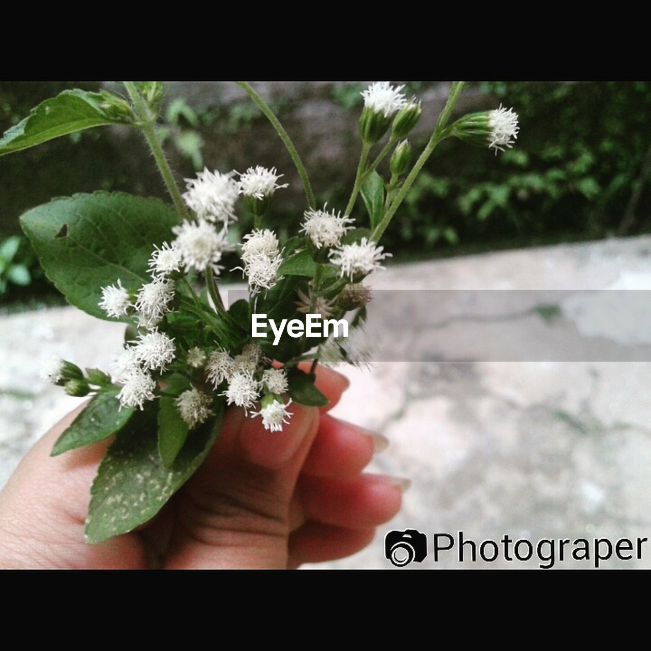 human hand, flower, human body part, real people, human finger, one person, holding, close-up, day, growth, focus on foreground, plant, outdoors, fragility, leaf, lifestyles, flower head, freshness, nature, men, people