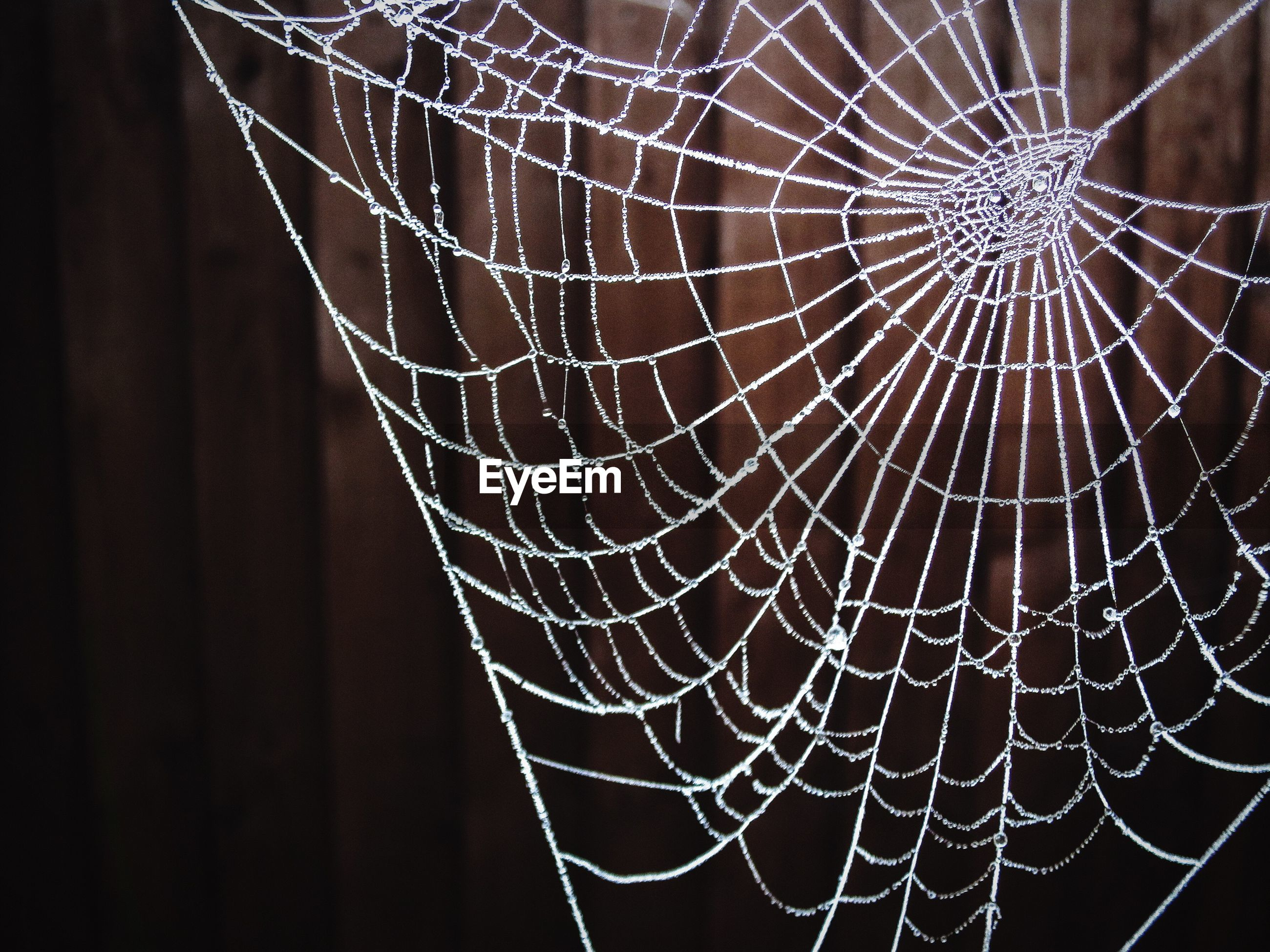 Close-up of spider web against wooden wall