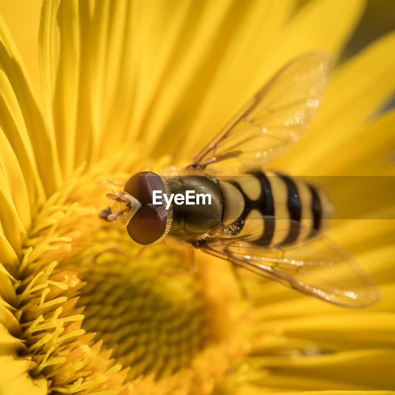 High Angle View Of Insect On Yellow Gerbera Daisy